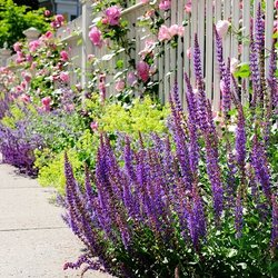 Photo Of Hamptons Landscaping Services   Hampton Bays, NY, United States