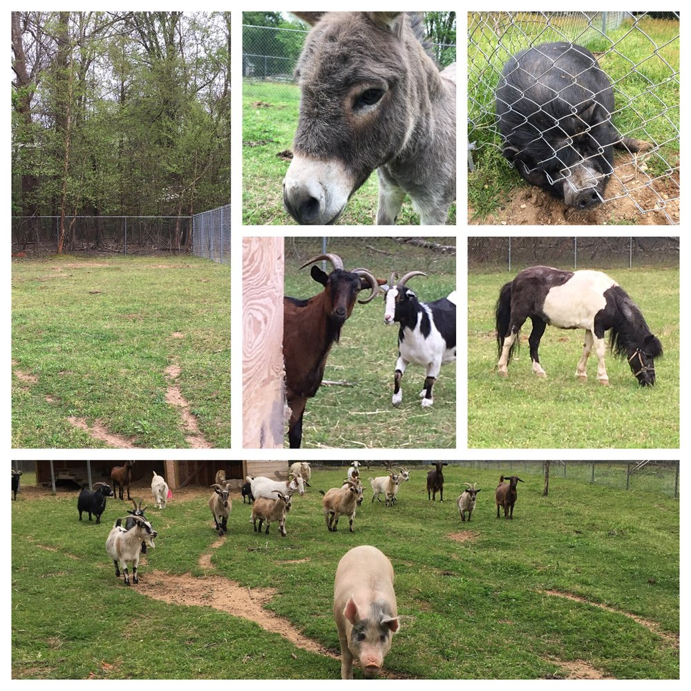 Cheryl's Rescue Ranch for Abused and Neglected Livestock Animals: Odenton, MD