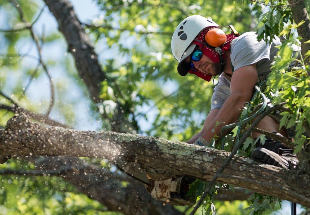 Emerald Tree Experts: 23 Kearsarge St, Bartlett, NH