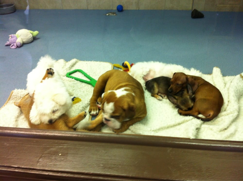 puppyville   closed   pet shops   4328 holland rd