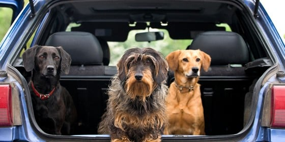 Seattle Pet Taxi: 10066 8th Ave NW, Seattle, WA