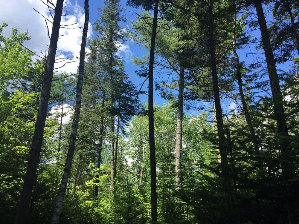 Stillwater State Park: 44 Stillwater Rd, Groton, VT