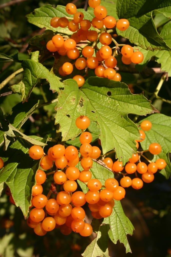 Oikos Tree Crops: Lawton, MI