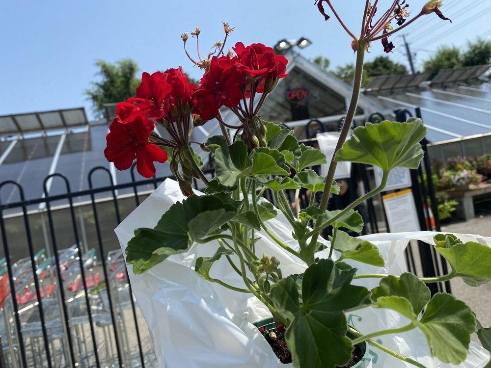 Mississauga Greenhouses & Florist