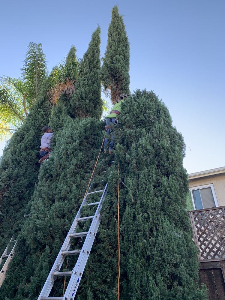 Affordable Tree Services Orange County