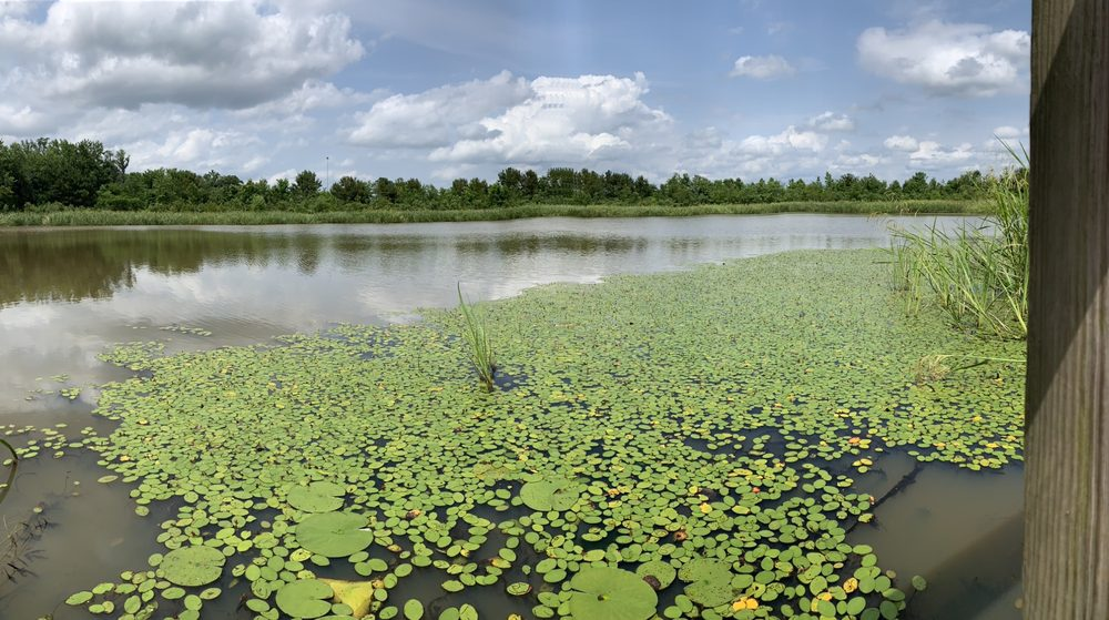 Phinizy Swamp Nature Park: 1858 Lock And Dam Rd, Augusta, GA