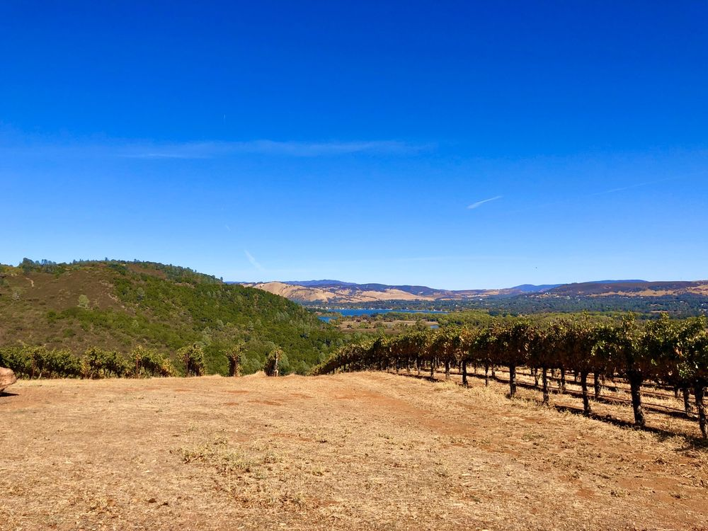 Shannon Ridge Family of Wines: 13888 Point Lakeview Rd, Lower Lake, CA