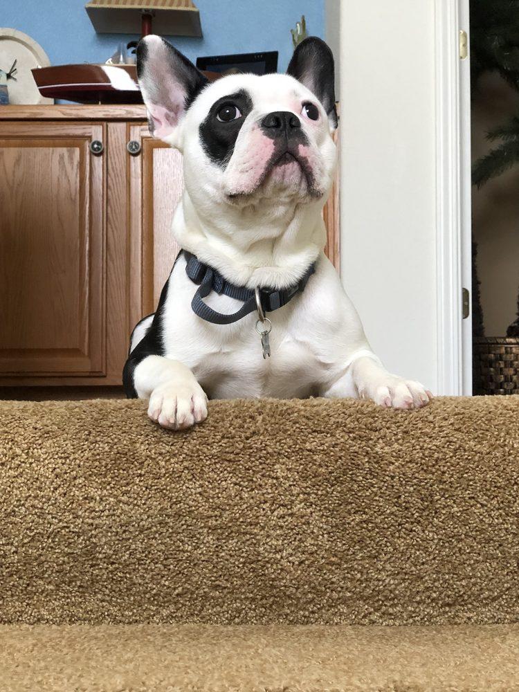 Premier Puppies - 12 Photos - Pet Breeders - West Plains, MO