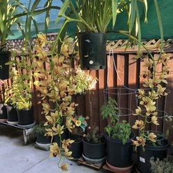 T & T Orchids - 51 Photos & 17 Reviews - Nurseries