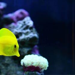 Yelp Reviews for Monrovia Tropical Fish & Pet Supply - 17 Photos