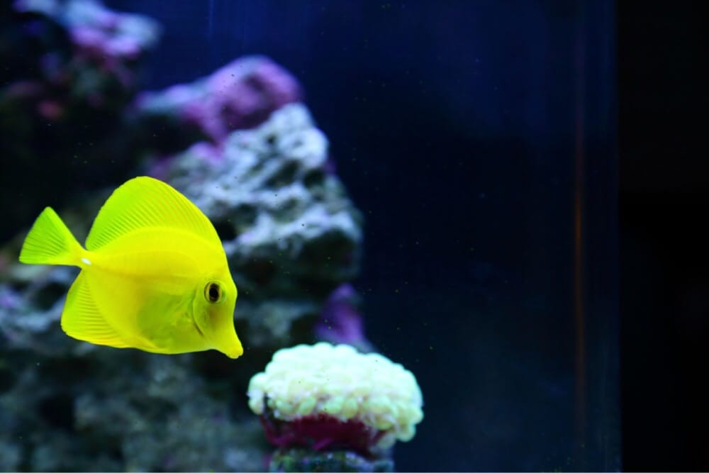 Monrovia tropical fish pet supply 18 photos 38 for Exotic fish and pets