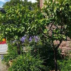 Botanischer Garten 52 Photos Botanical Gardens Hans Thoma Str