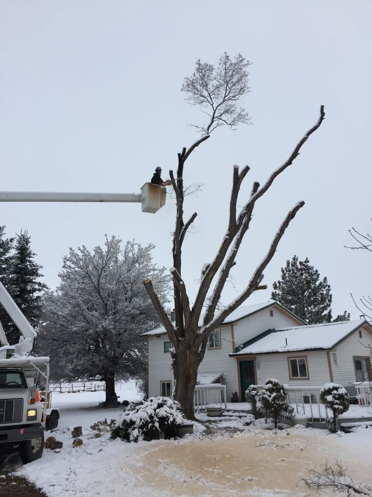 Miller Tree Service: 25 S 9th W St, Saint Anthony, ID