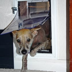 Photo Of Hale Pet Door   Glendale, AZ, United States. If You Don