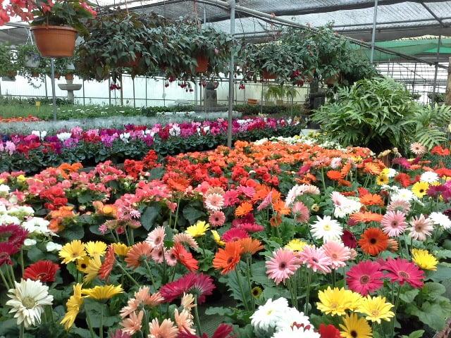 Viveros rocha indhent et tilbud blomsterhandlere urb for Viveros canarias
