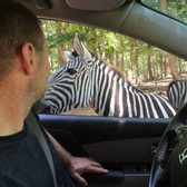 Safari In Va >> Virginia Safari Park 596 Photos 179 Reviews Zoos 229 Safari