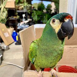 Pampered Birds - 88 Photos & 141 Reviews - Bird Shops - 3183