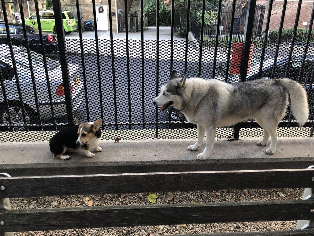 Jackson Heights Canine Recreation Wonderland
