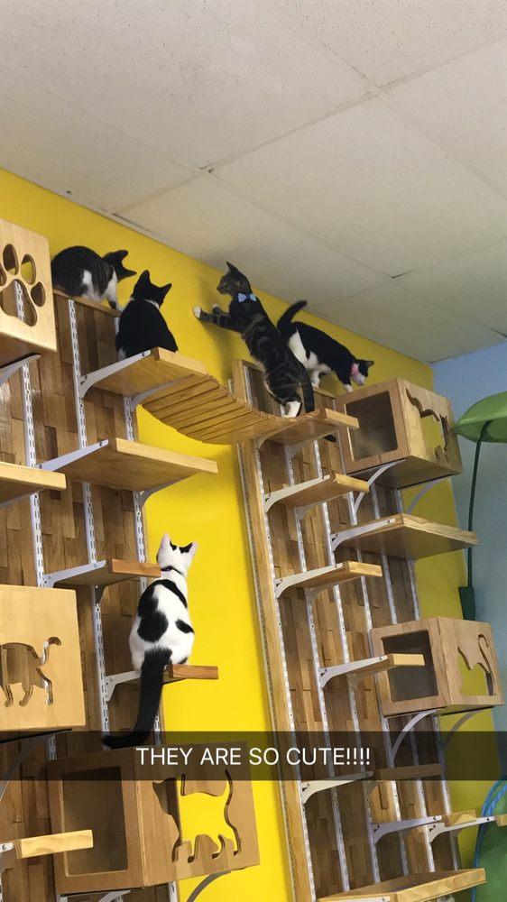 Honky Cat Hotel & Cat Cafe