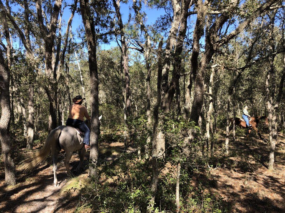 Horsespring Farm: 3135 Owl Roost Trl, Lake Wales, FL