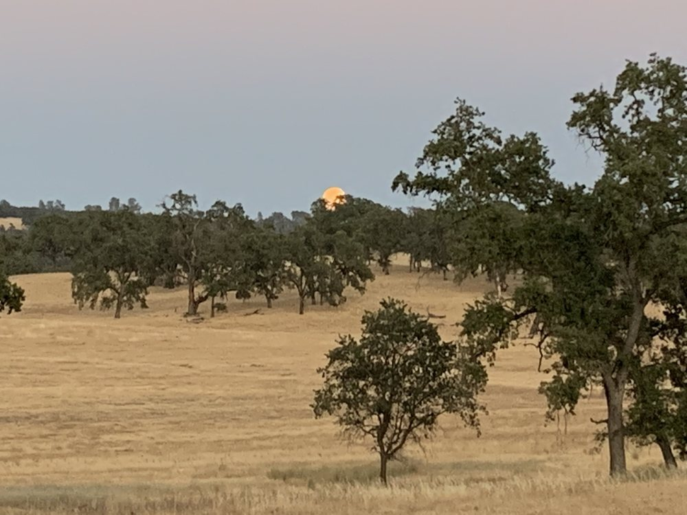 Spenceville Wildlife Area: Beale AFB, CA