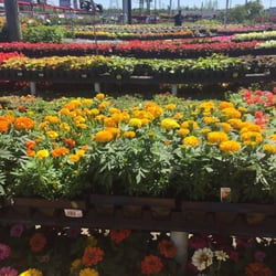 Photo Of Houston Garden Centers   Richmond, TX, United States. Awesome  Selection