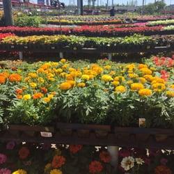 photo of houston garden centers richmond tx united states awesome selection - Houston Garden