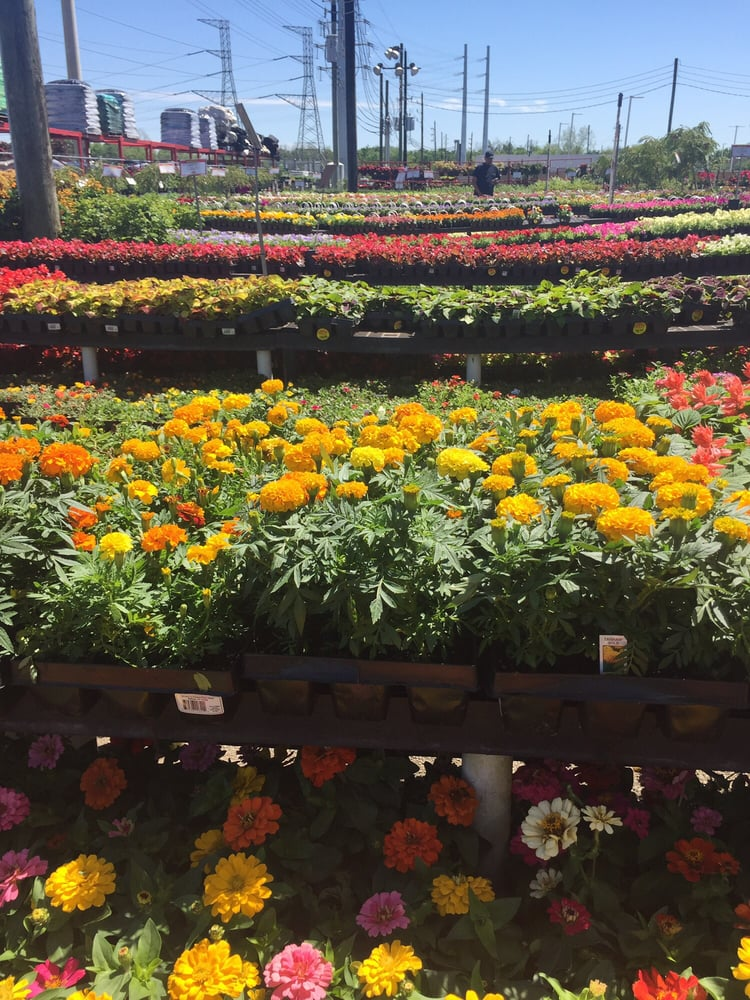 Houston garden centers garden centres 20415 sw fwy richmond tx united states phone Houston garden centers houston tx