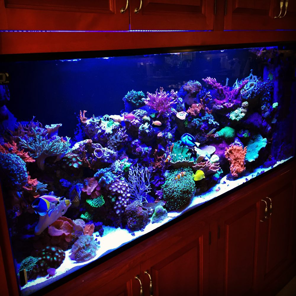 150 gal mixed reef tank set up by saltwater solutions aquarium