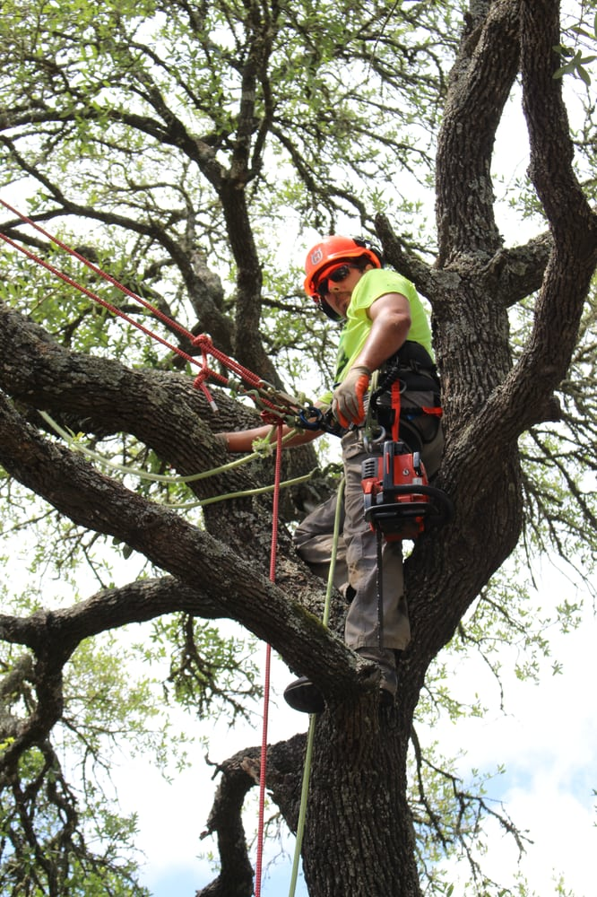 Top Point Tree: College Station, TX