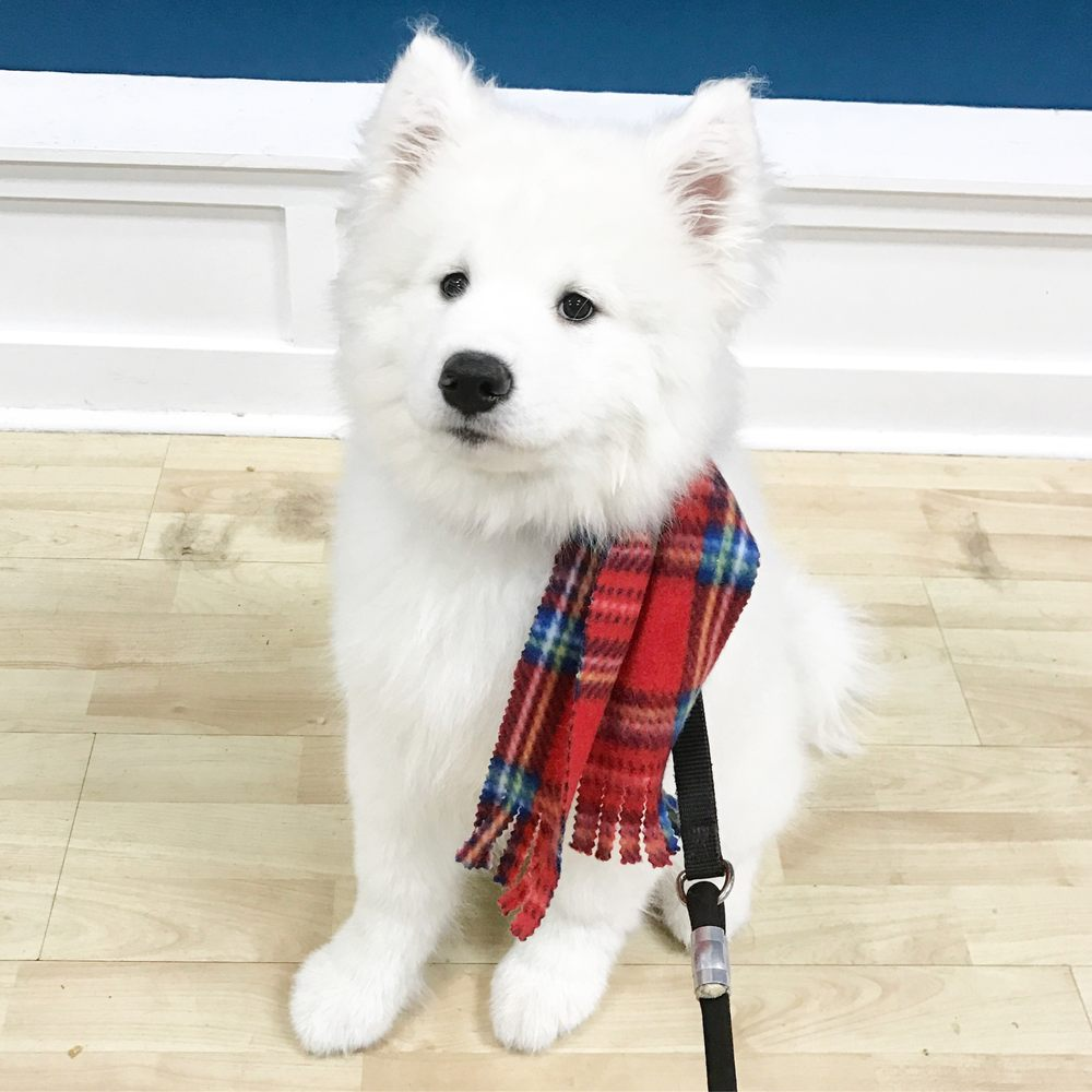Great Dog Grooming Seattle