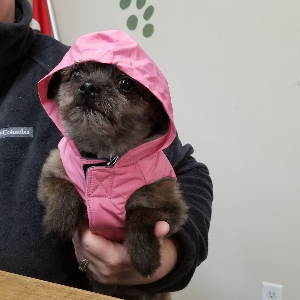 A Comfy Pet Grooming Salon: 104 Federal St, Milton, DE