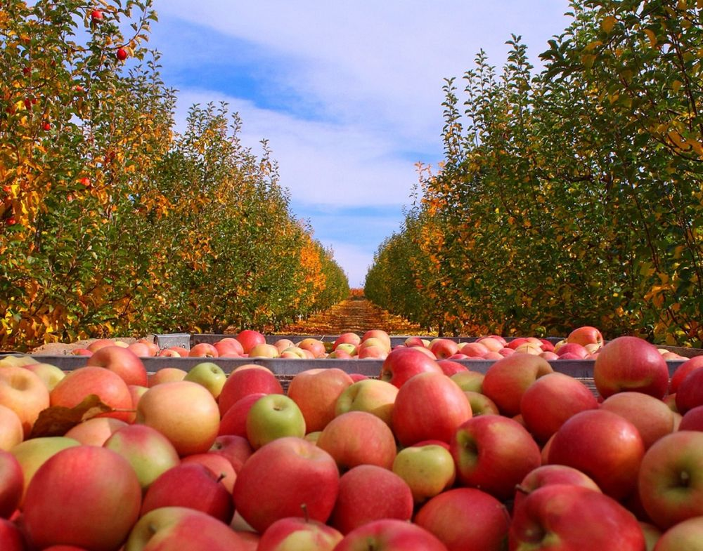 Boa Vista Orchards: 2952 Carson Rd, Placerville, CA