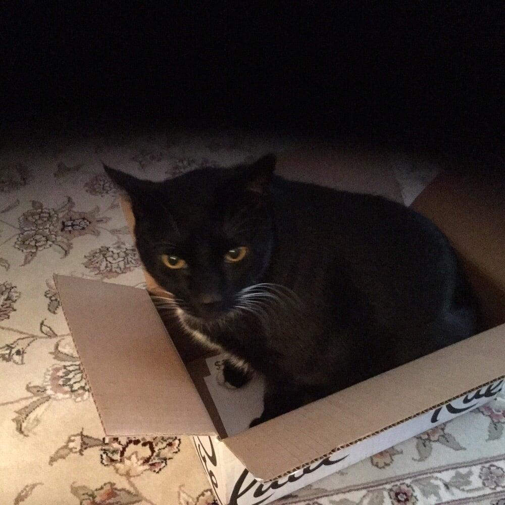 Just 4 Cats: Boston, MA