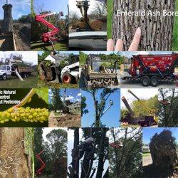 A Ackerman Tree Service