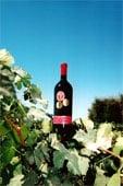 Silkwood Wines