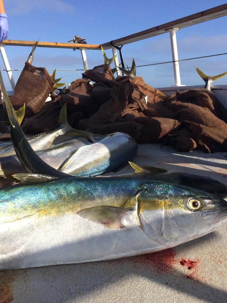 The day 39 s catch yelp for Point loma fishing
