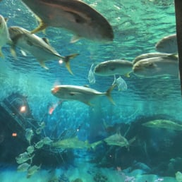 Jenkinson S Aquarium 102 Billeder 51 Anmeldelser