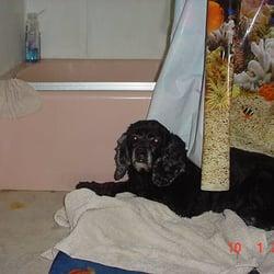 Dog Grooming Oak Park