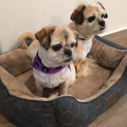 Pet groomers in santee yelp zip a dee doo dogs mobile dog grooming solutioingenieria Image collections