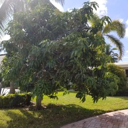 Photo Of Green Seasons Lawn Landscaping Margate Fl United States Before