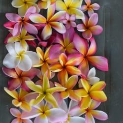 Clarence Nishikata Hawaii Plumeria Nursery