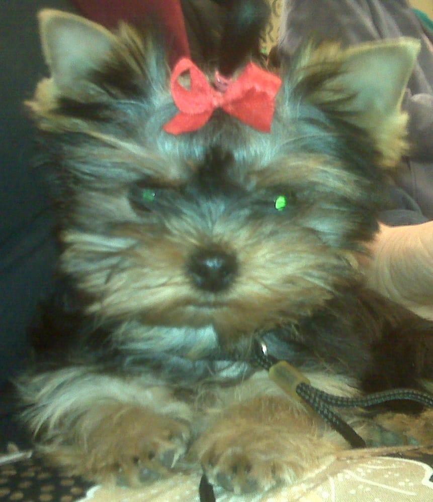 Cyndi's Pet Grooming: 451 Cedar St, Jenkintown, PA