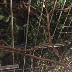 bambus garten 12 foto 39 s chinees lichtenbroich d sseldorf nordrhein westfalen duitsland. Black Bedroom Furniture Sets. Home Design Ideas