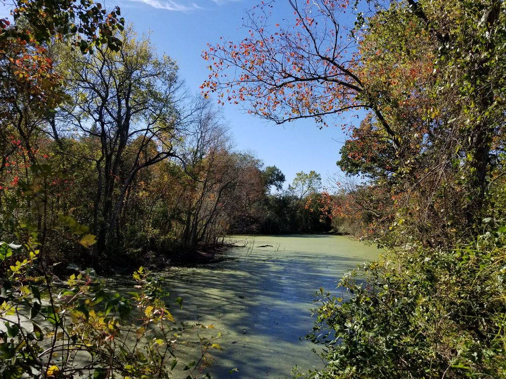 Bee Creek Park: 1900 Anderson St, College Station, TX