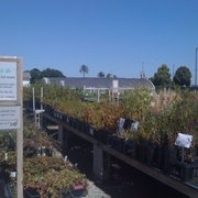 Surprisingly Large Selection Photo Of The Watershed Nursery Richmond Ca United States