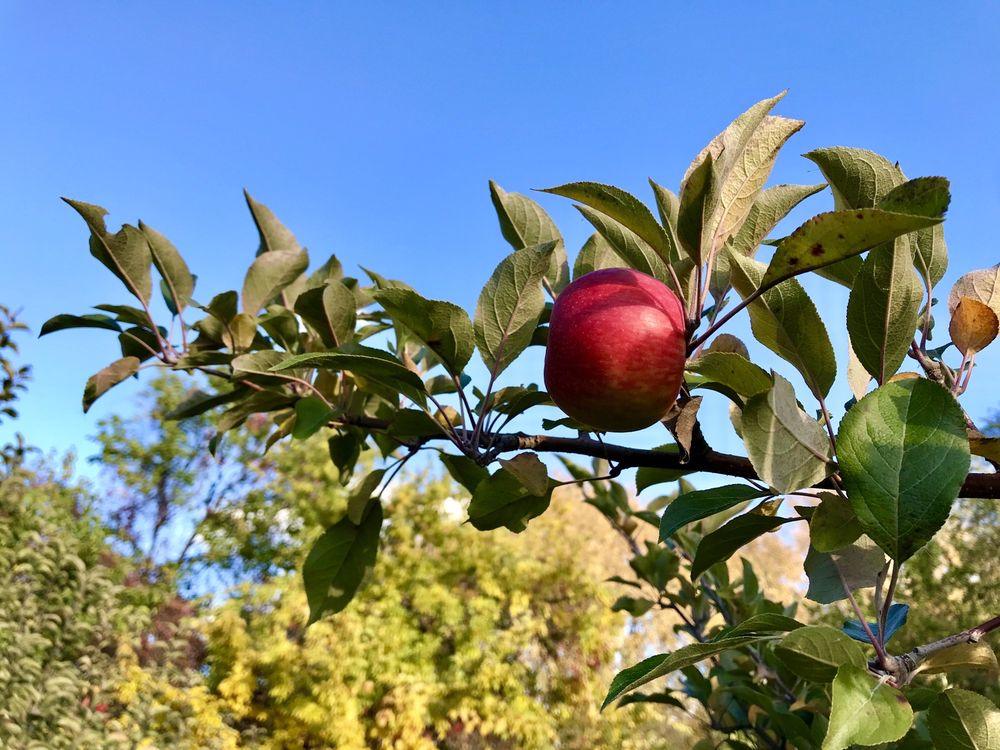 Victoria Valley Orchard: 4304 N Victoria St, Shoreview, MN