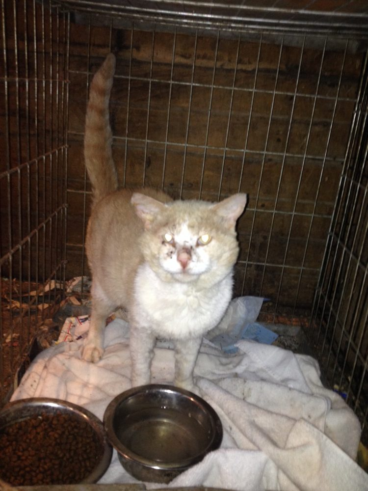 Fur Keeps Animal Rescue: 142 Old Dundee Rd, Barrington Hills, IL