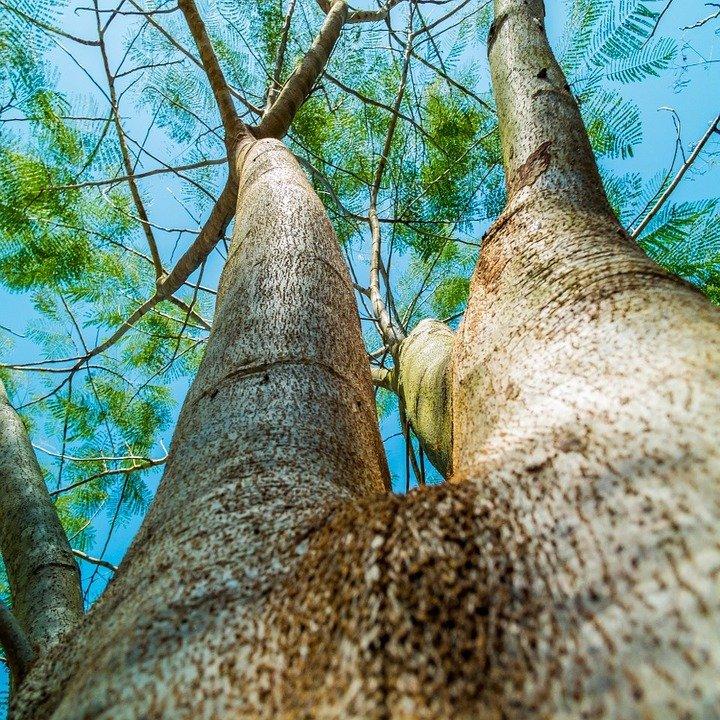 Anvid's Tree Service: 9016 Swan Lake Rd, Alborn, MN