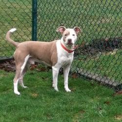 Dog Kennels Naperville Il